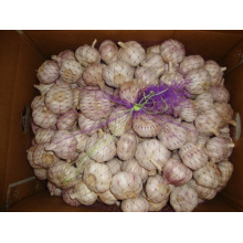 Normal Hybrid White Garlic